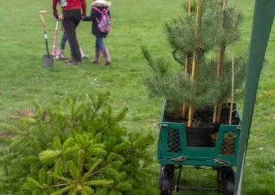 Tree planting in Kings Heath Park Jan 2019-18