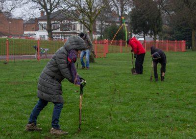 Tree planting in Kings Heath Park Jan 2019-19