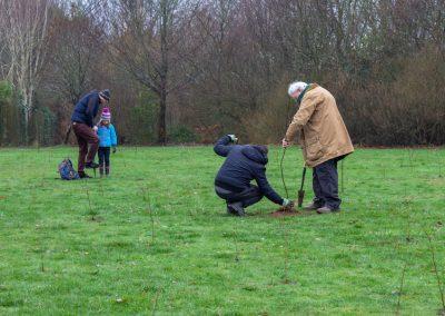 Tree planting in Kings Heath Park Jan 2019-23