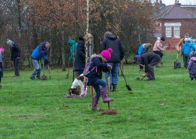Tree planting in Kings Heath Park Jan 2019